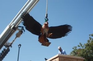 Installation of the Hawk